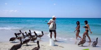 Pelícanos de Varadero (Foto: Jorge Huerta E.)