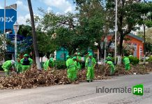 La marea verde de la CDMX en labores de limpieza y retiro de árboles (Foto: Jorge Huerta E.)